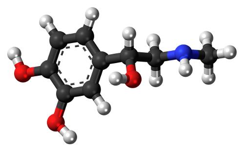 worin ist leptin enthalten